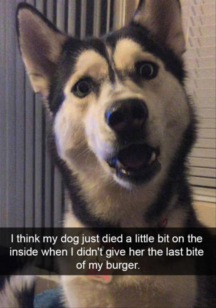 funny-dogs-snapchat-4