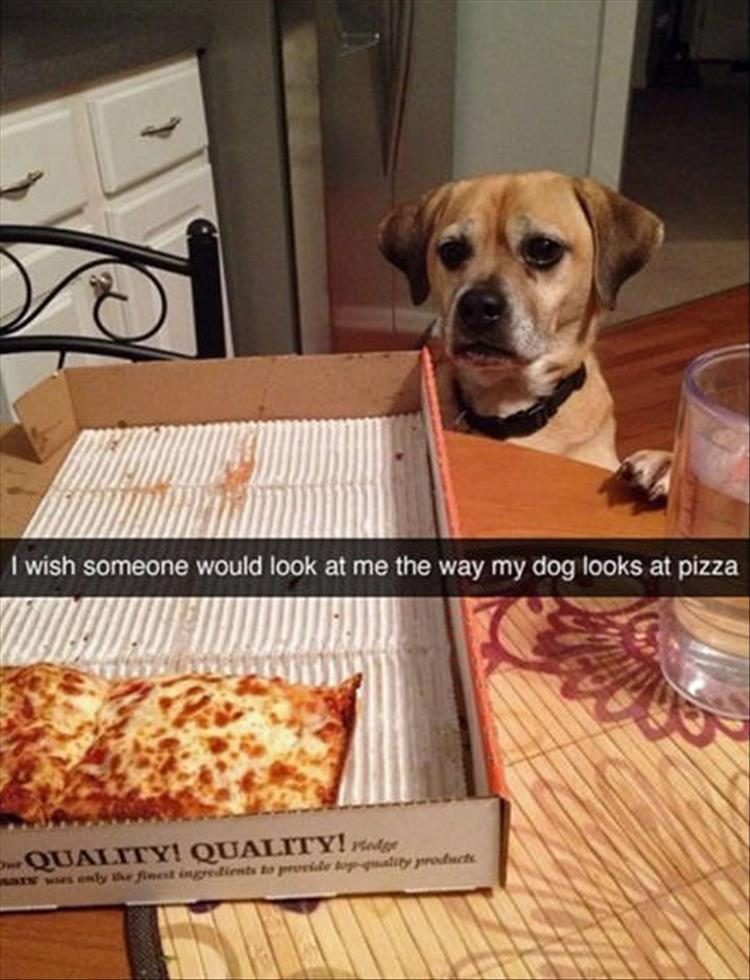 funny-dogs-snapchat-6