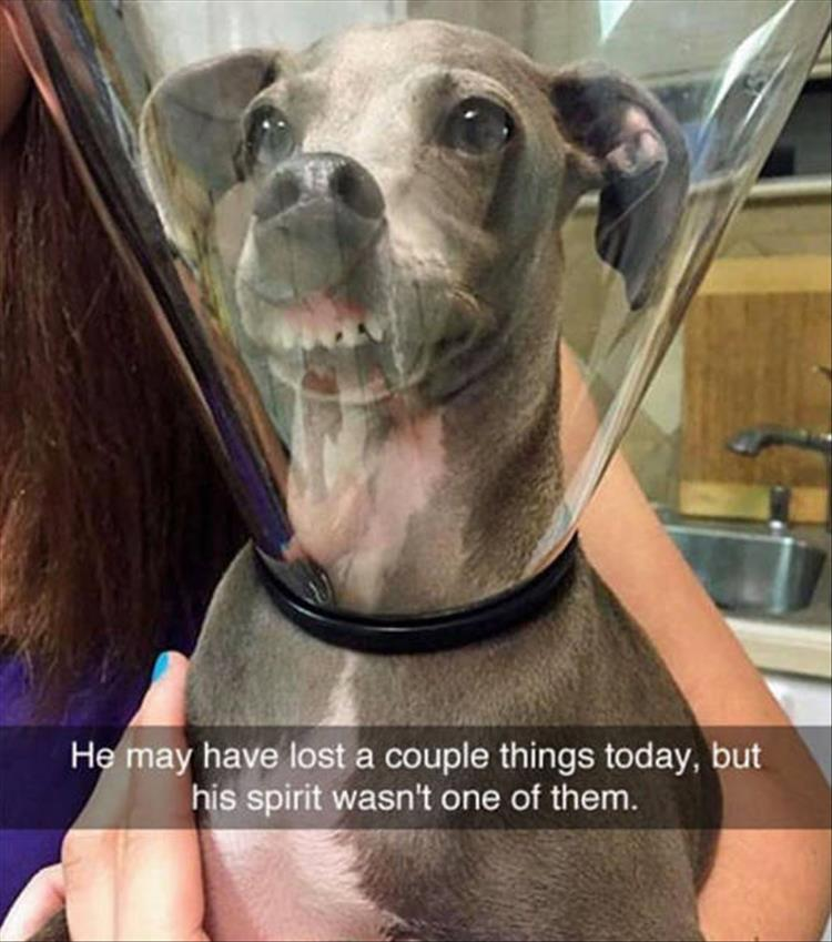 funny-dogs-snapchat-9