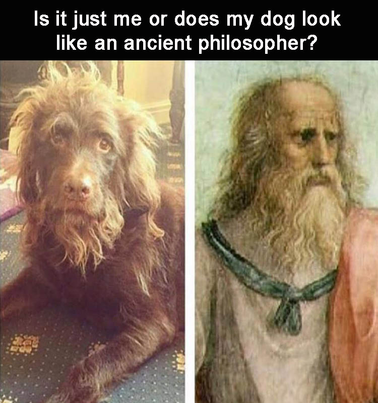 is-it-just-me-or-does-my-dog-look-like-an-ancient-philosopher