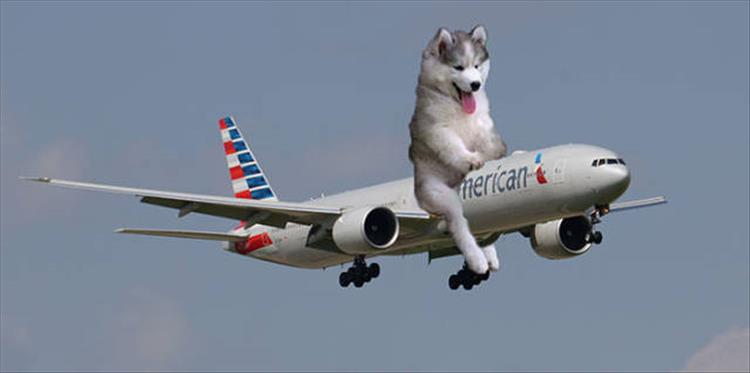 photoshopped-dog-20