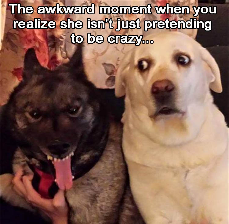the-crazy-dog