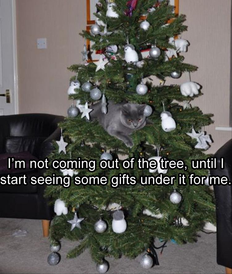 im-not-coming-out-of-this-tree-until-i-see-some-gifts-under-it-for-me