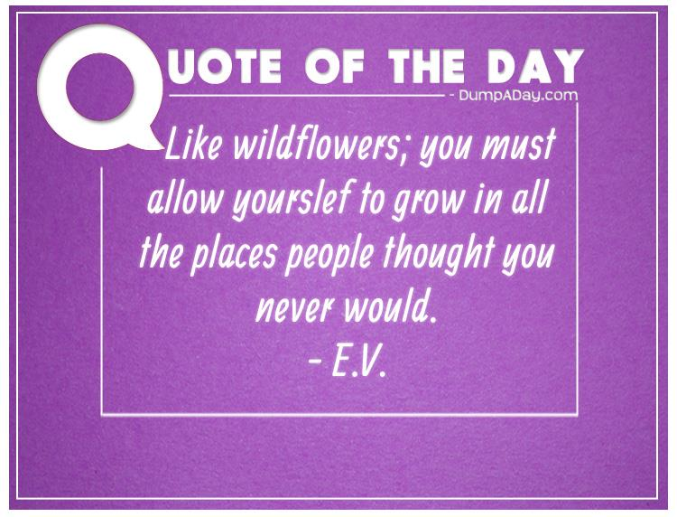 like-wildflowers