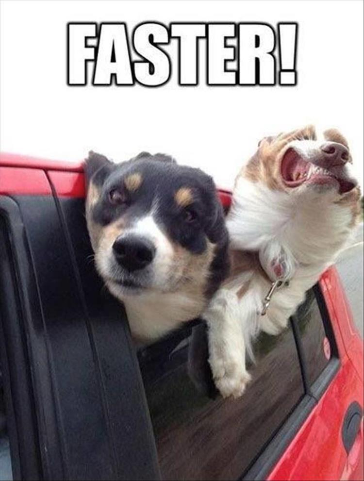 a-funny-animals-2
