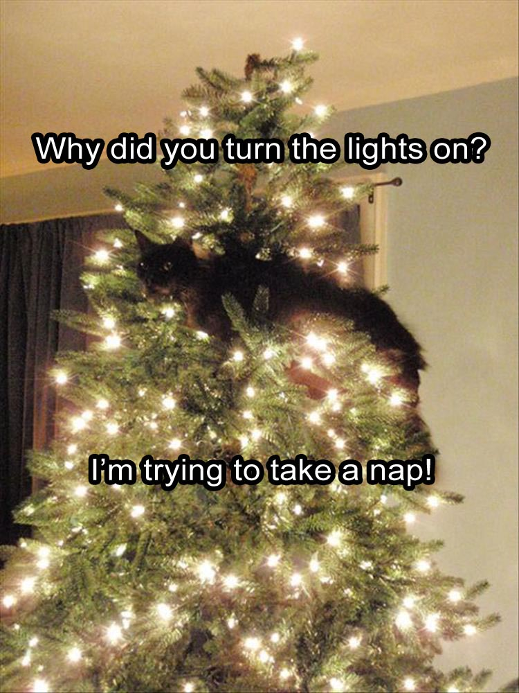 can-you-turn-the-lights-off-im-trying-to-get-a-nap