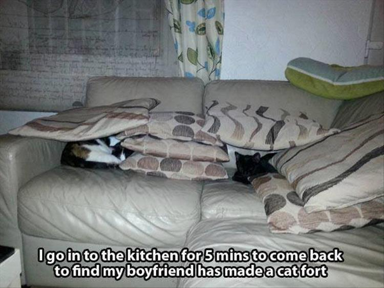 funny-animals-10