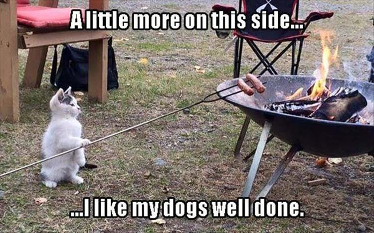 Funny Animal Pictures Of The Day Pics - 26 funny photos of guilty dogs