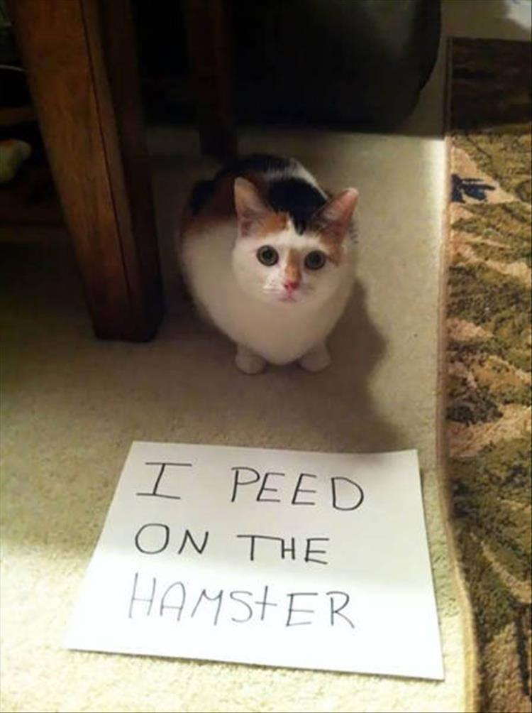 funny-animals-14