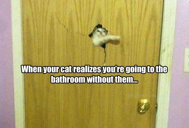 funny-animals-25