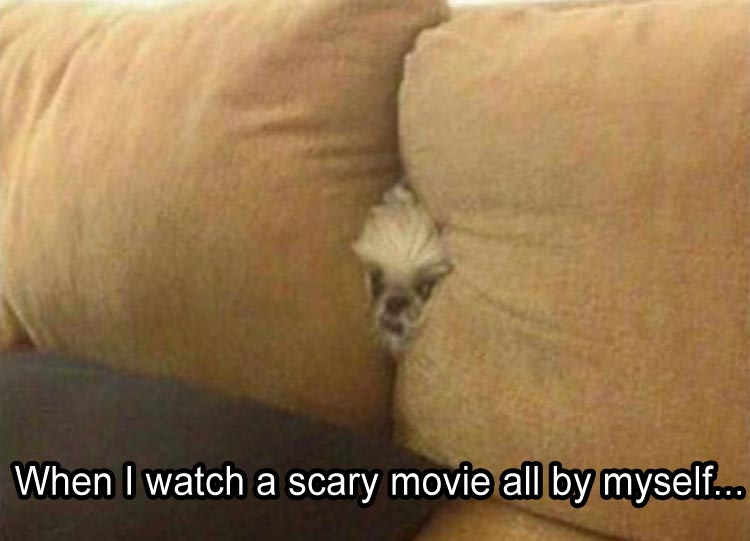 me-when-i-watch-a-scary-movie-by-myself
