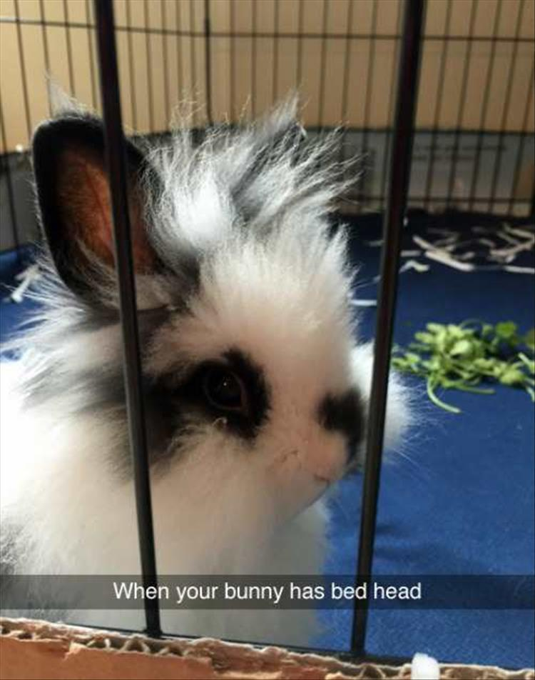 the-funny-animals-16