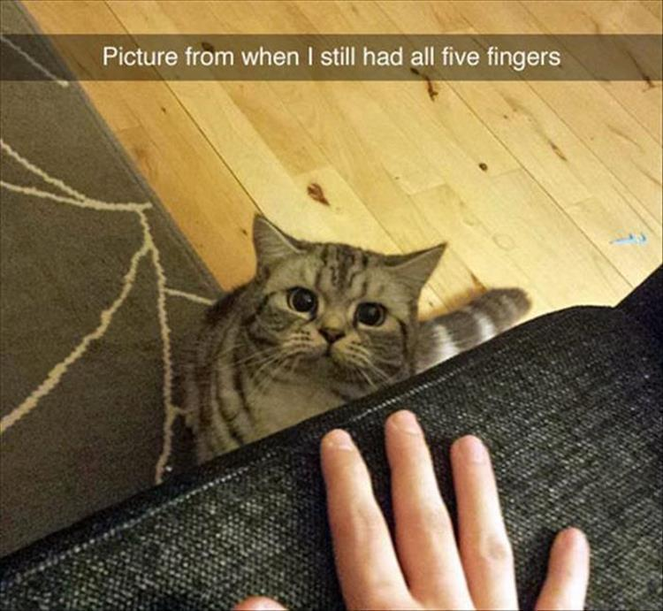 the-funny-animals-19