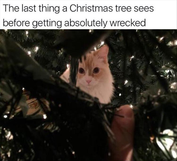 the-last-thing-a-christmas-tree-sees