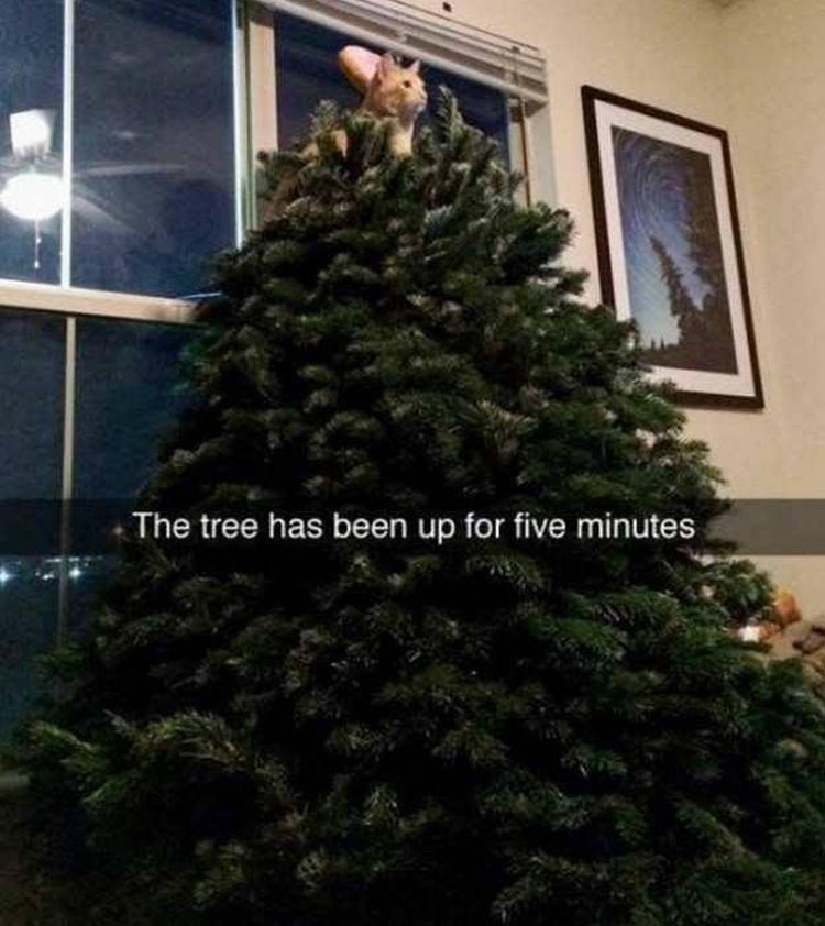 the-tree-has-been-up-for-five-minutes