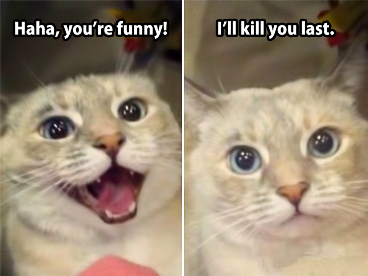 the funny animals (1)
