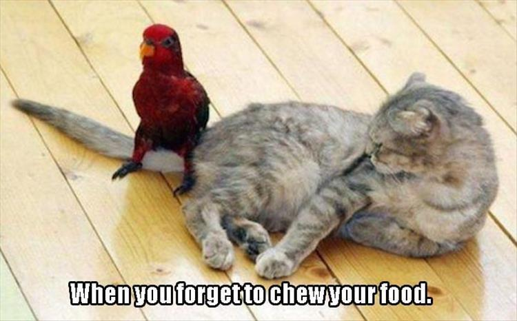 the funny animals (13)