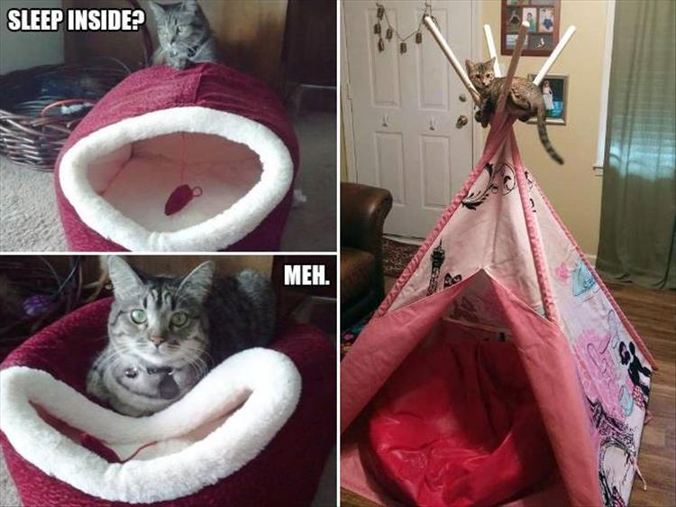 funny animal pictures (3)