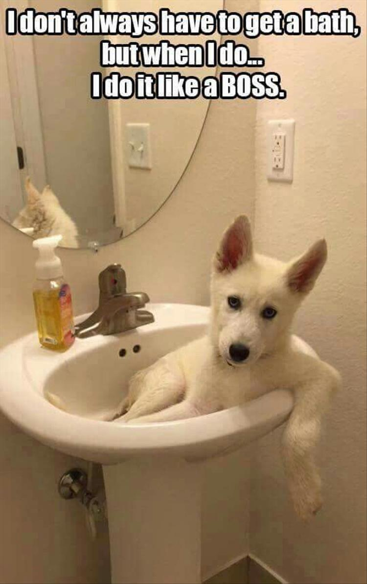 Cleaning Animal: Funny Animal Pictures Of The Day