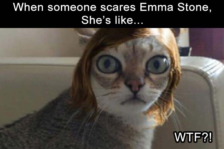 if Emma Stone was a cat