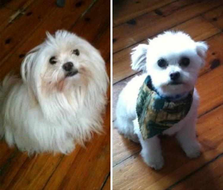 Dogs Before And After Haircuts Are The Cutest Things You