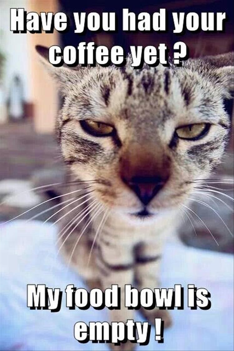 Funny Animal Thank You Meme : Funny animal picture dump of the day pics