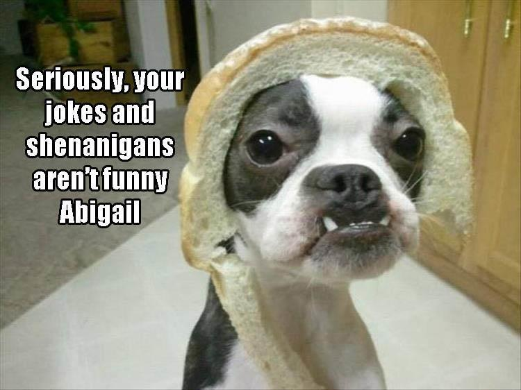 Morning Funny Animal Picture Dump 24 Pics