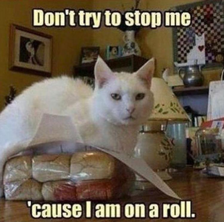Funny Animal Wednesday Meme : Funny animal picture dump of the day pics