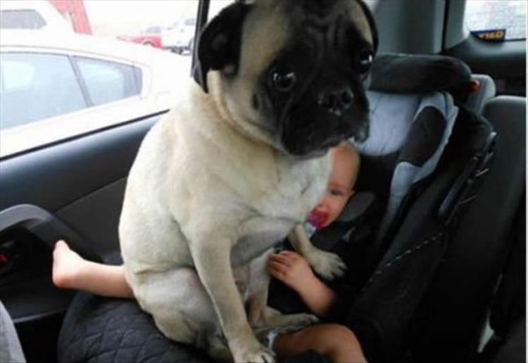 Proof dogs have no concept of personal space 20 pics - Dogs for small spaces concept ...