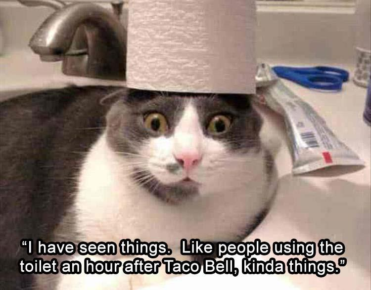 Funny Memes For Kids Animals : Funny animal picture dump of the day 25 pics