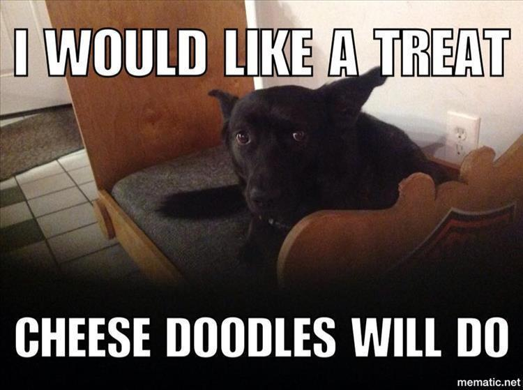 Funny Meme June 2015 : Funny animal picture dump of the day pics
