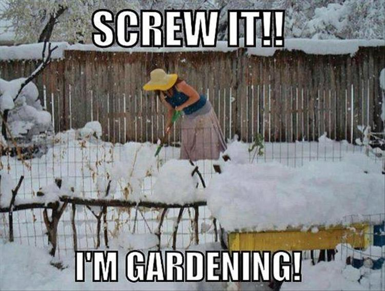 Funny Memes For Winter : Morning funny picture dump 36 pics