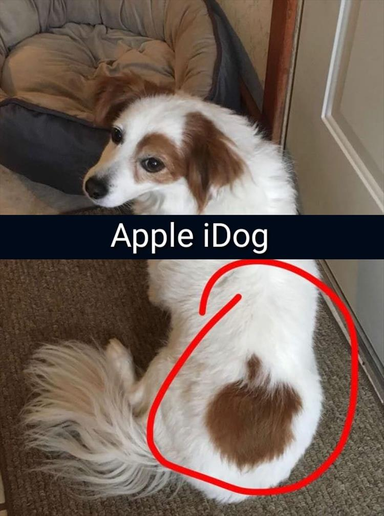 Funny Animal Pictures 33 Pics