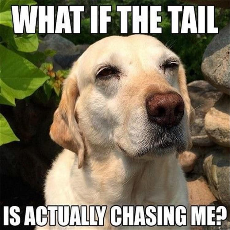 Funny animal pictures with captions for adults - photo#32