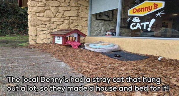 Faith In Humanity Restored 15 Pics