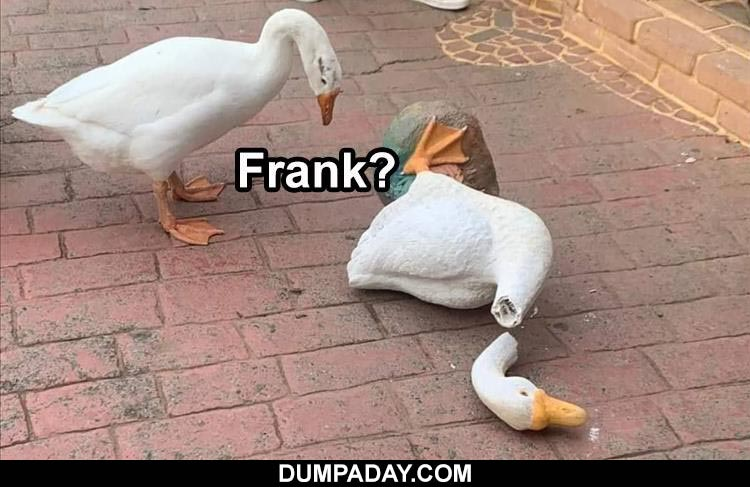 Top 24 Funny Animal Memes Of The Day To nominate a meme, simply comment a name of a meme that started or peaked in the month we are voting for. top 24 funny animal memes of the day