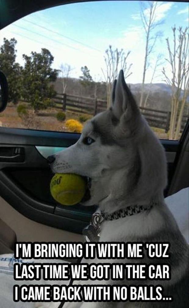 funny dog ball pics