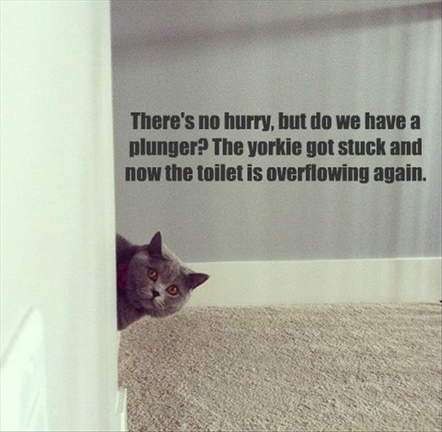funny animals (1)