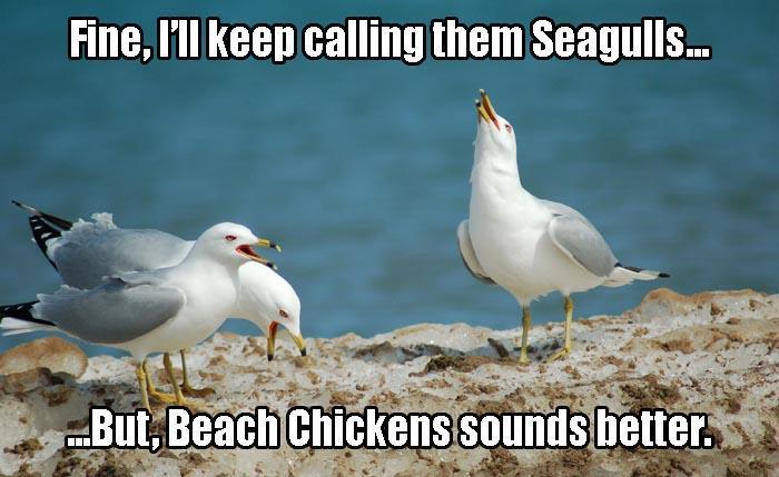 a beach chickens