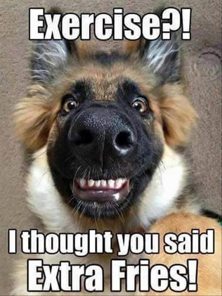 [Image: happy-dog.jpg]