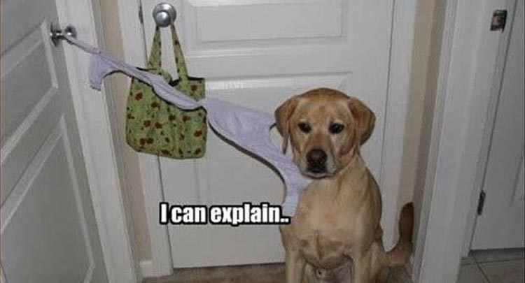 Innocent Until Proven Guilty (Animal Edition) – 24 Pics