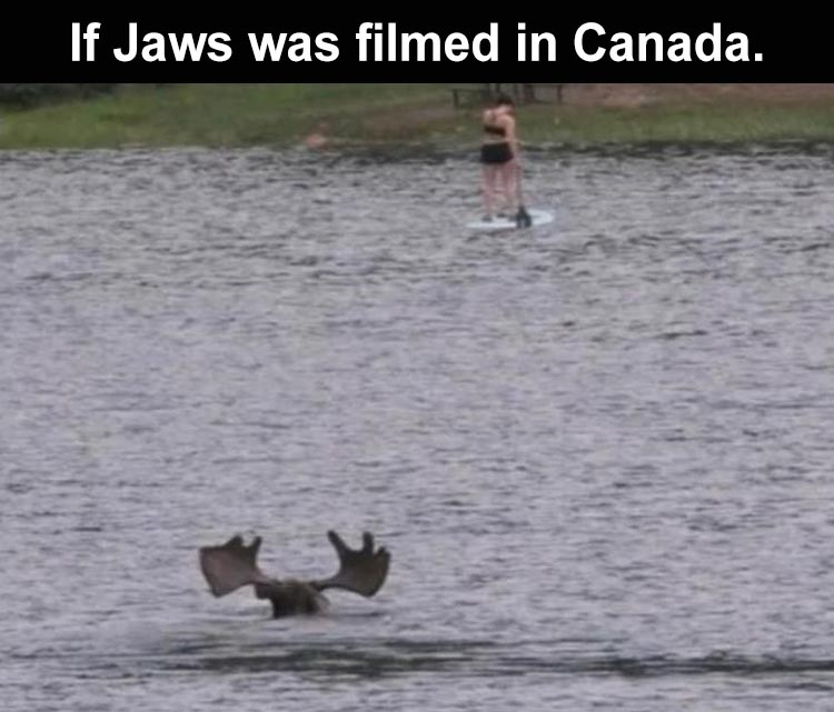 when-jaws-was-made-in-canada.jpg
