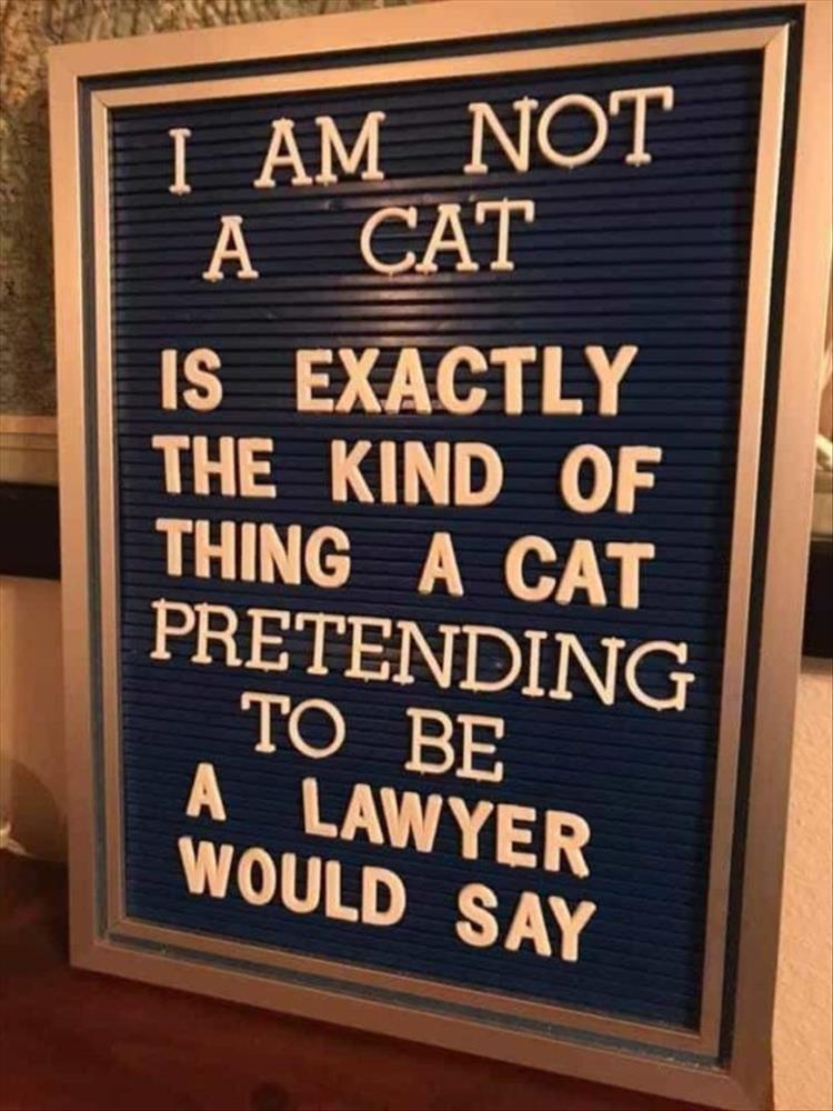 your-cat-1.jpg