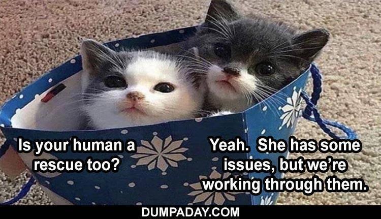 funny-animals-23-8.jpg